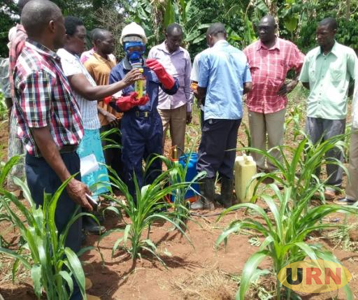 Sarah Namubiru the Luweero District Production Officer demonstrating to farmers on how to use the recommended Striker insecticides  to spray against the fall armyworm. Striker among the insecticides which is out of stock.