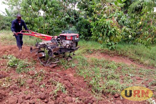 A farmer of Zirobwe sub county clearing overgrown grass from his coffee plantation