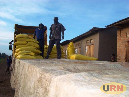 Casual labourers offloading rice from a Tanzanian Trailer at Minziiro Porous border posts, residents complain of harassment on crossing to Tanzania.jpg