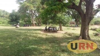 Pupils having lessons under tree shades